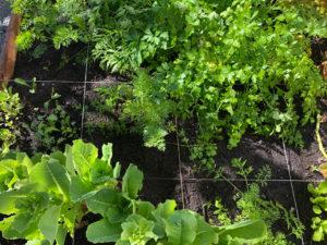 greenleaf-irrigation-garden